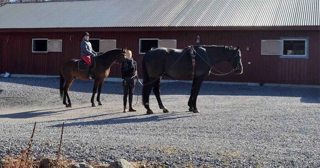 vad tusan är det för fel på mina hästar.....