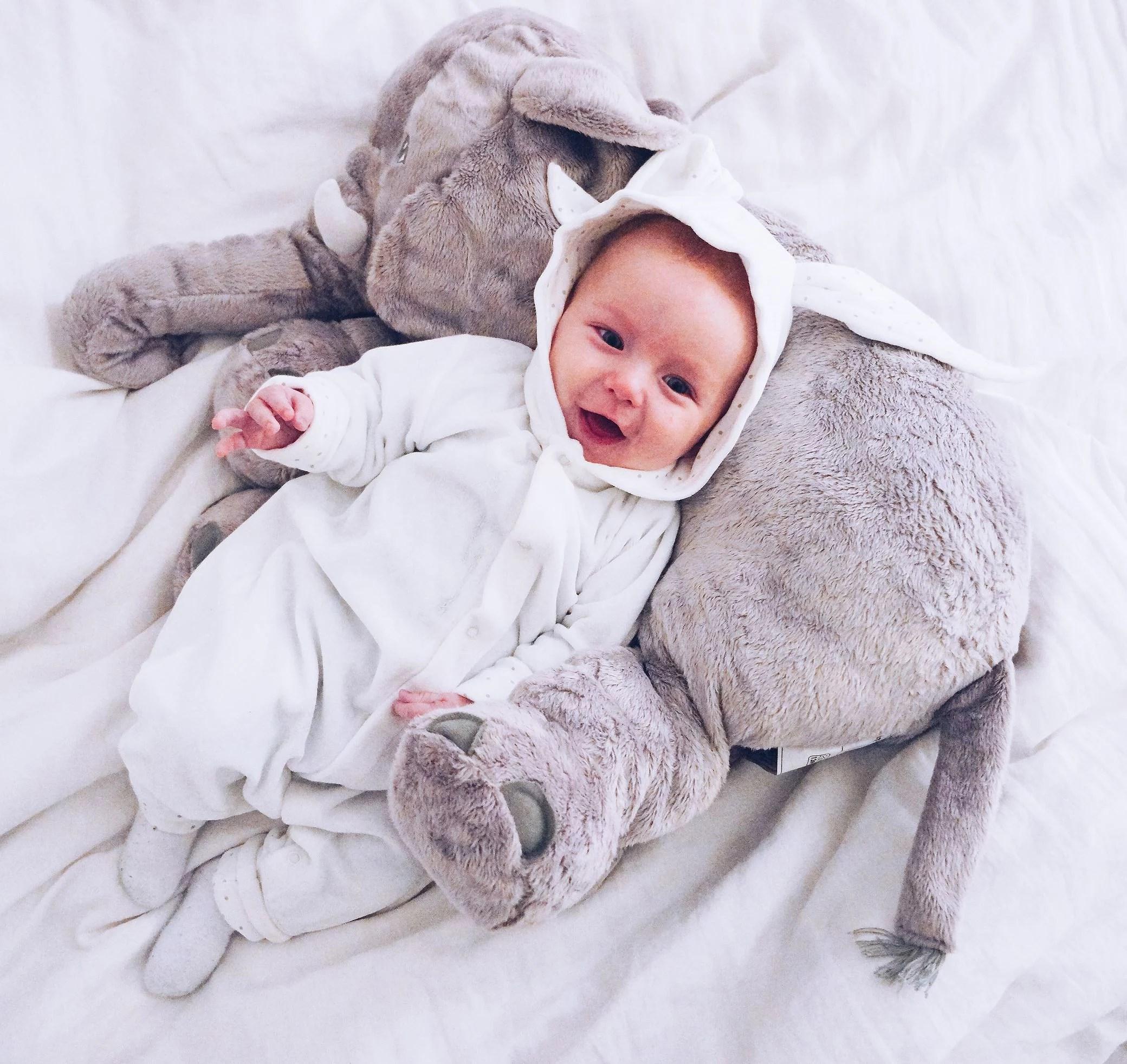 babybunny