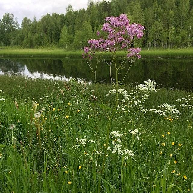 Sweden...