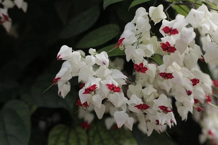 jardin botanico bonn