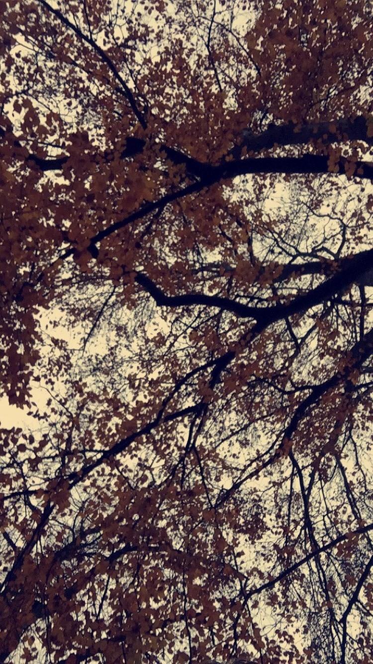 Morgonpromenad