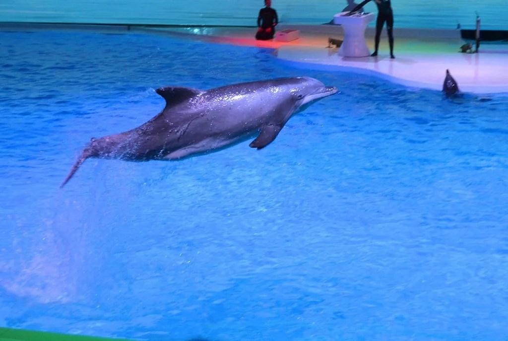 delfiner12