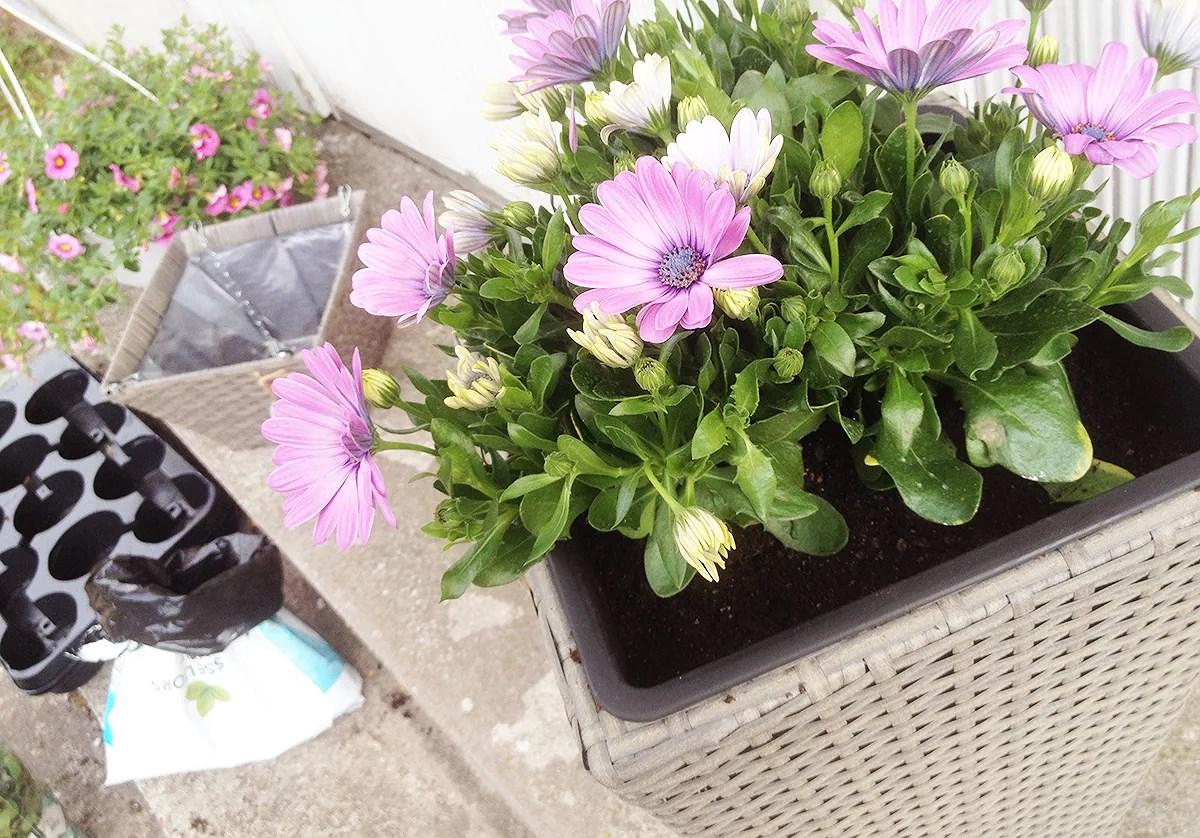Plantering.