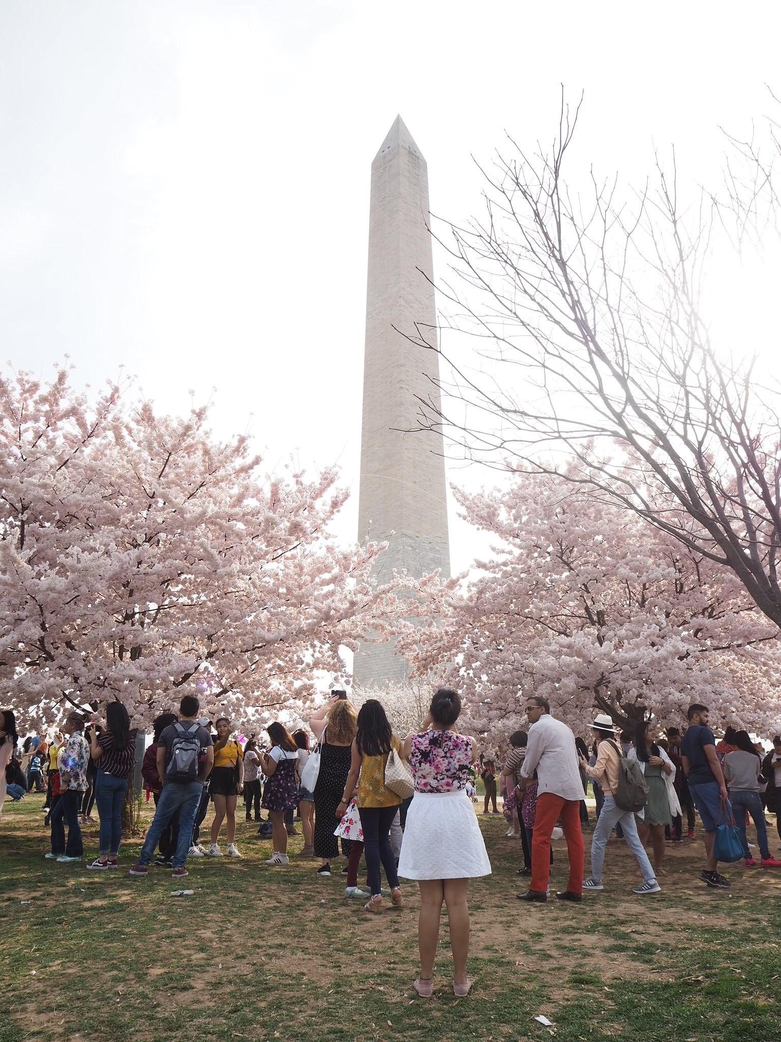 Cherry Blossom, Wicked Waffle & Kite Festival