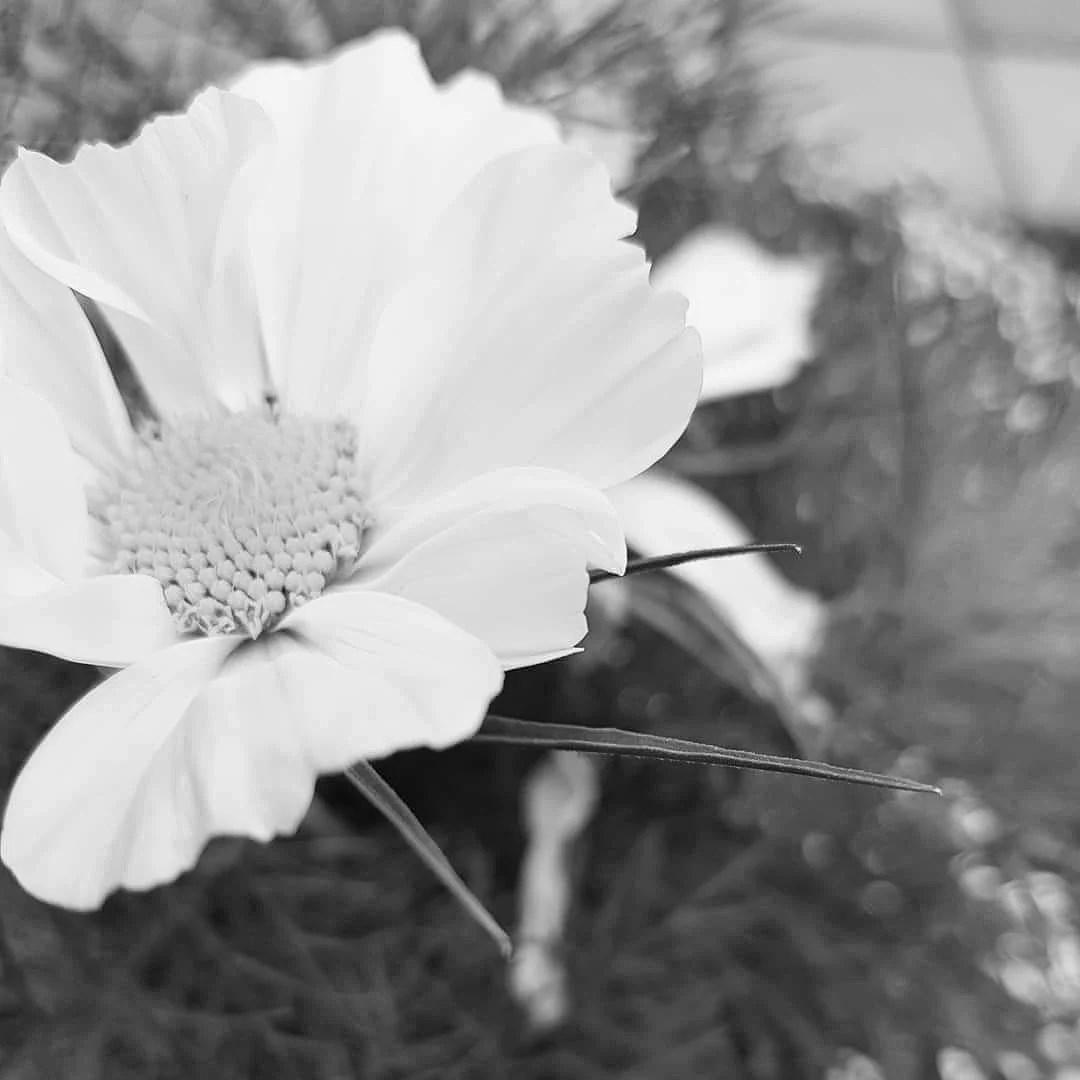FLOWER POWER ♡
