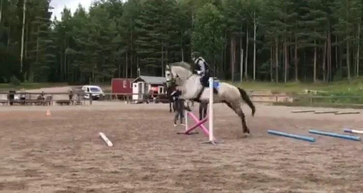 Hoppträning med grå