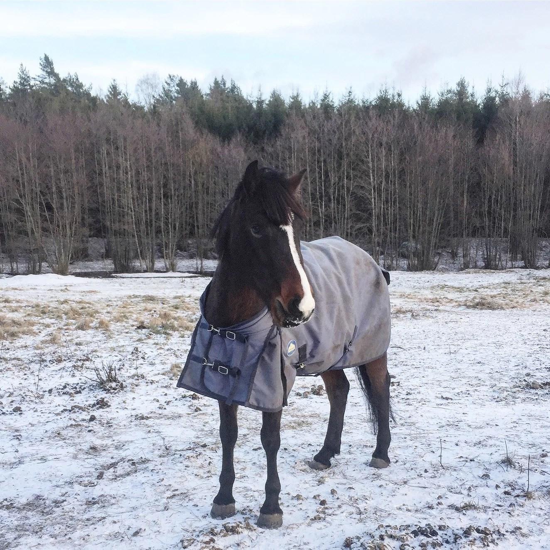 Lifeupdate 1 || Starta YT || Hästarna nu