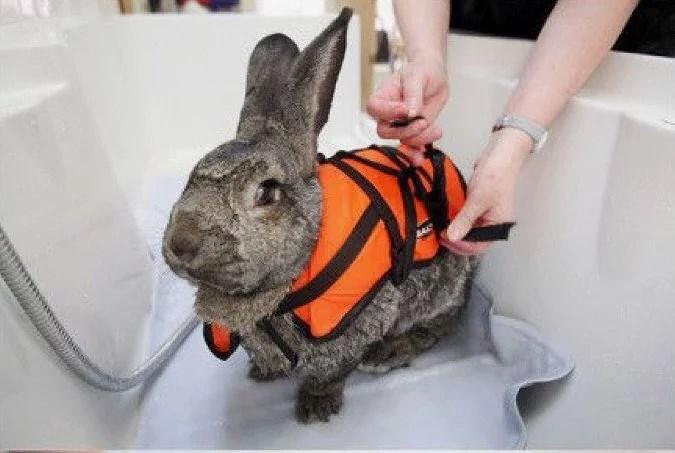 Simmande kanin