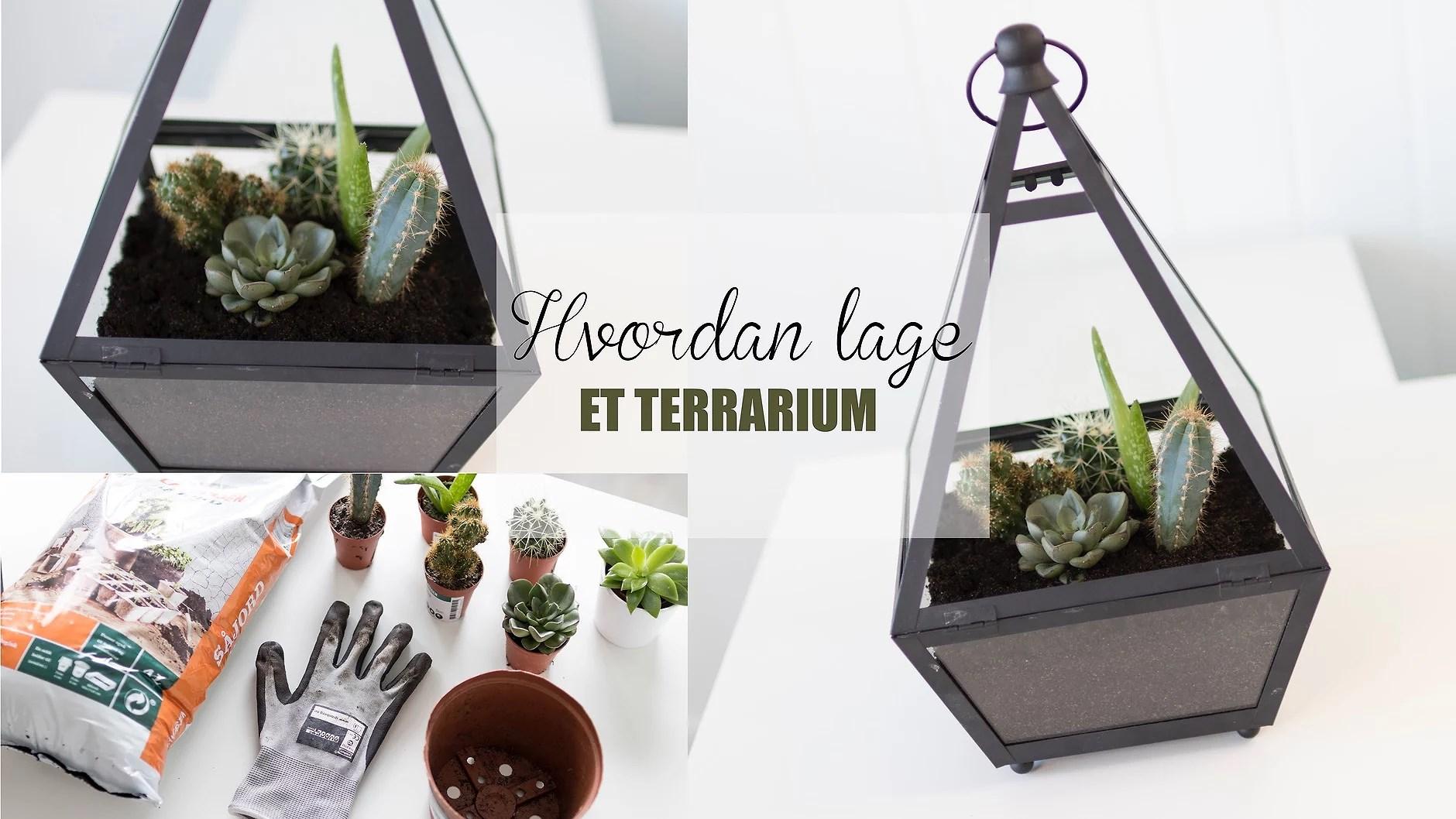 Hvordan lage - terrarium!
