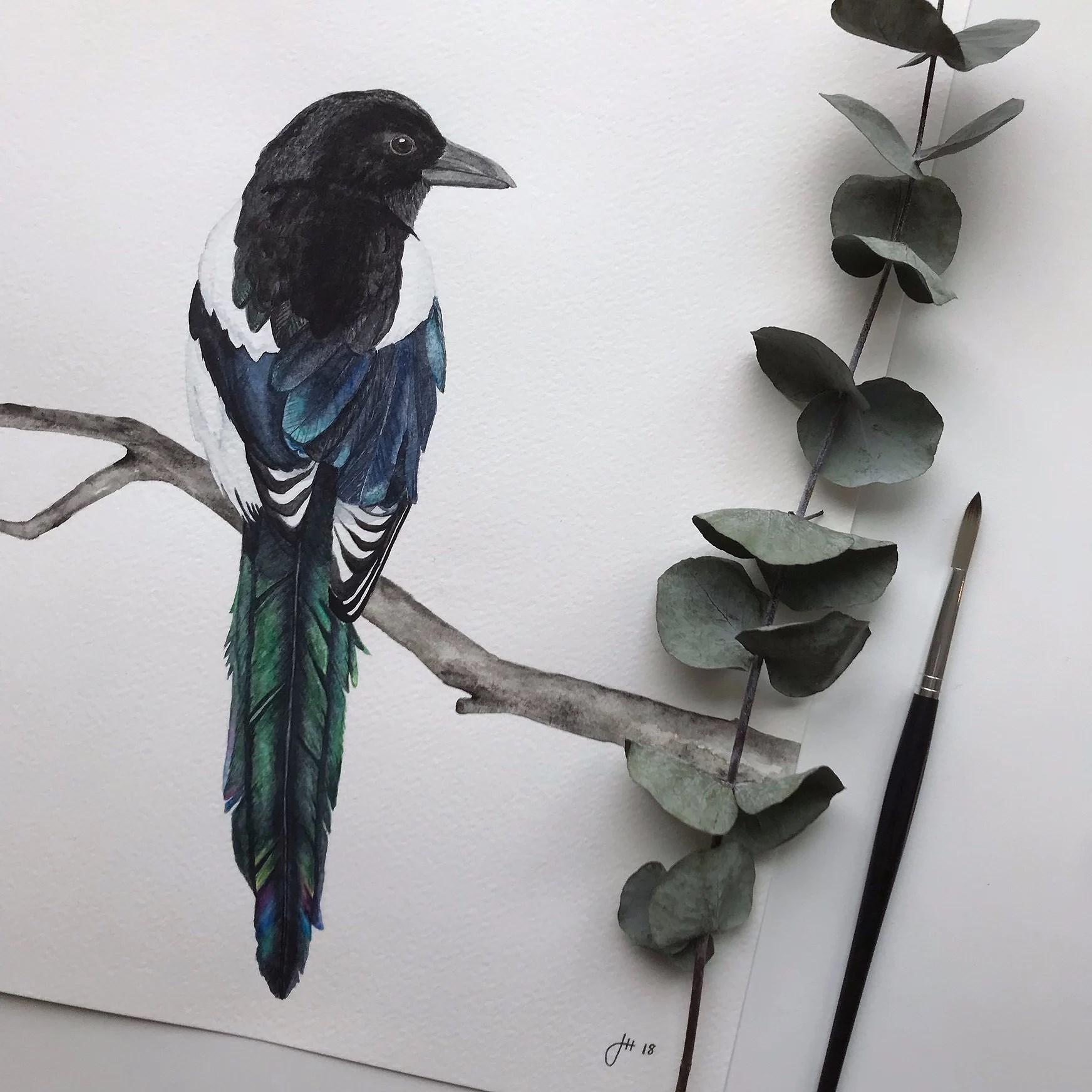Skata i akvarell målad bakifrån
