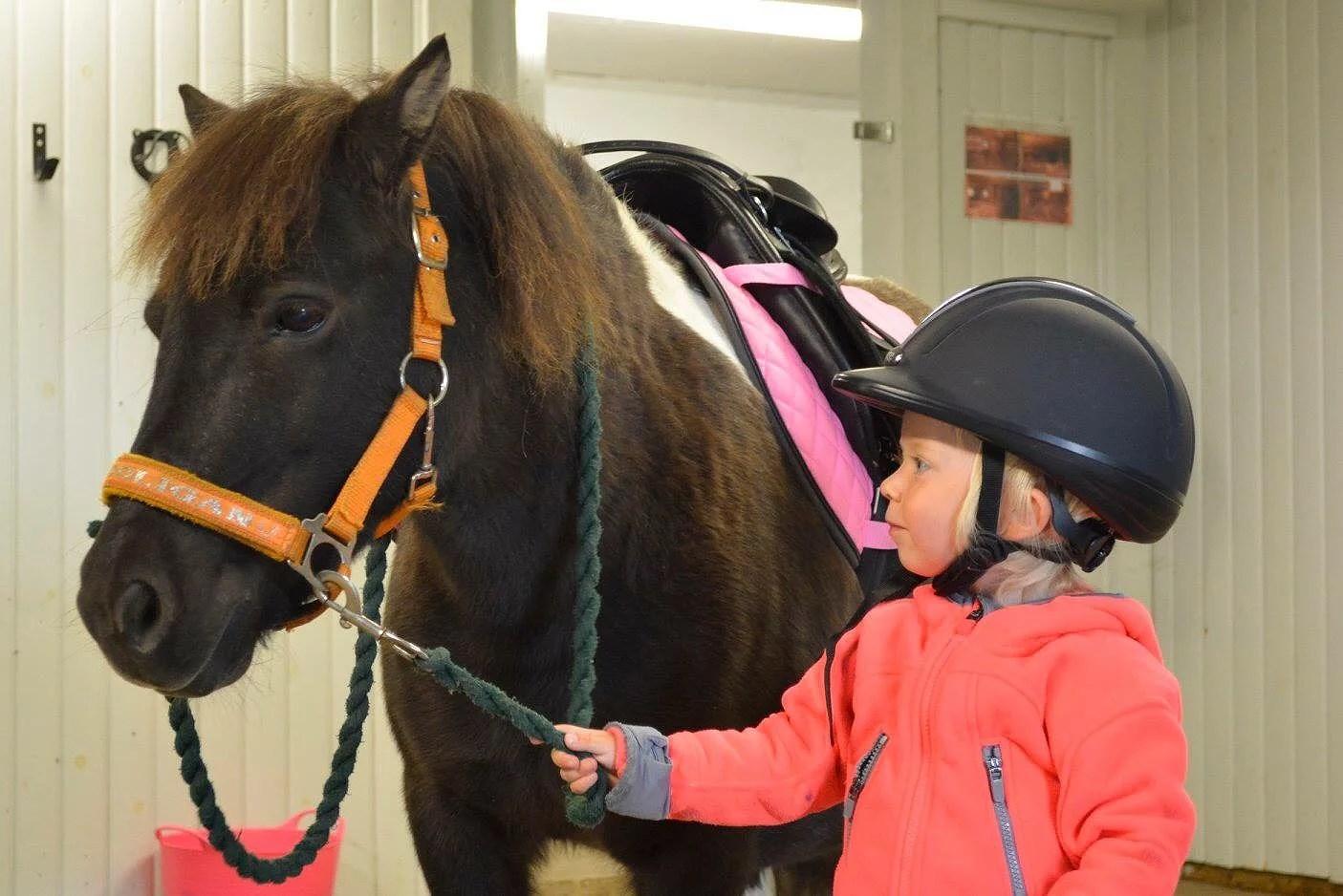 Hästarnas schema v2