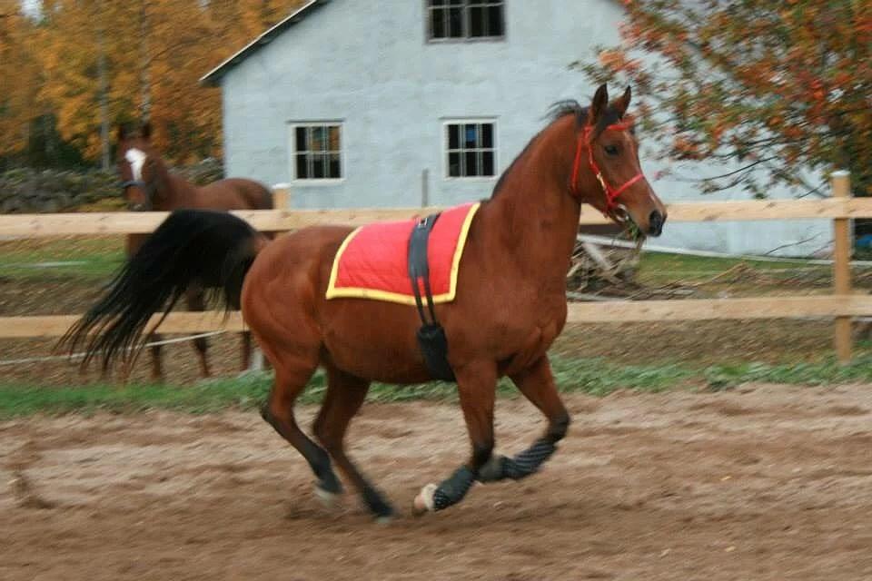 Hästarnas schema V8 (lov)