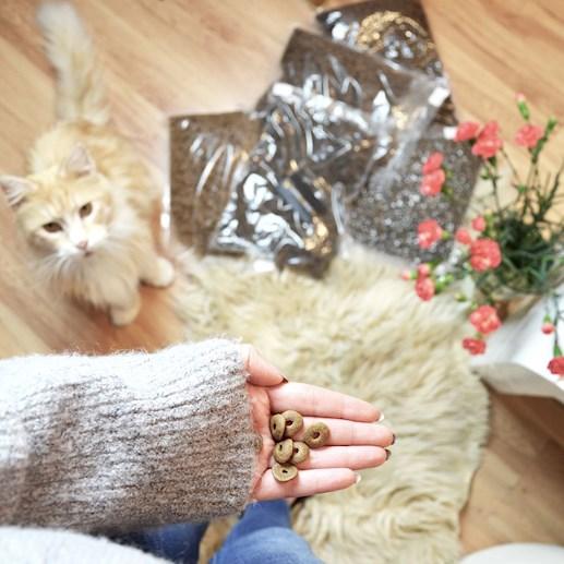 jaka karma dla kota najlepsza
