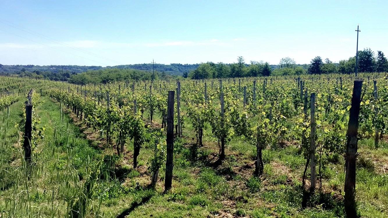 På cykeltur i vinmarkerne