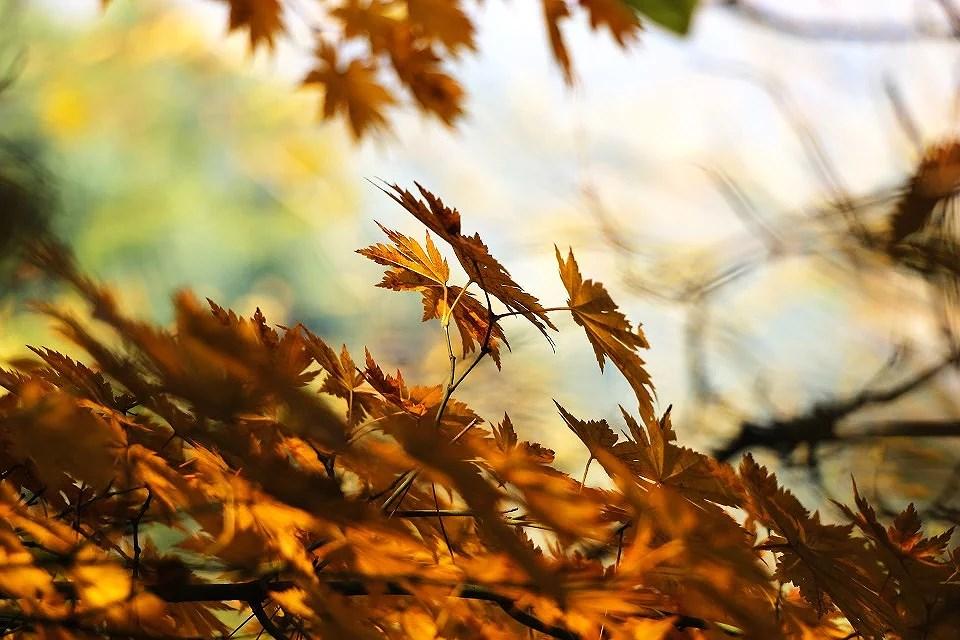 Efterårsmode #1 // Hennes & Mauritz