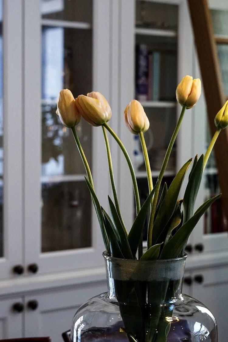 Franska tulpaner