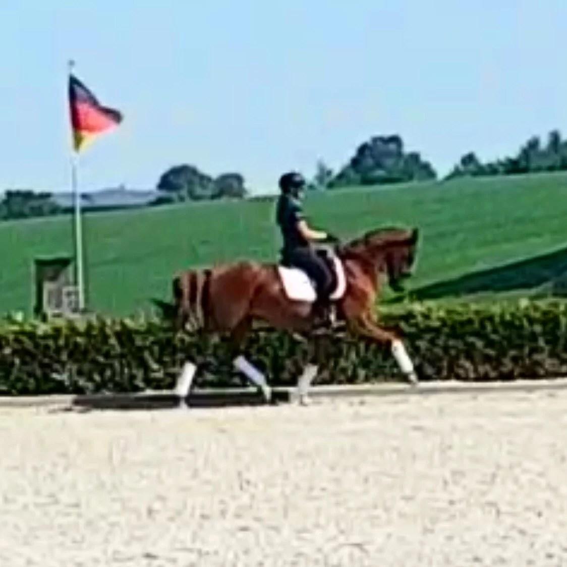 Nya hästen