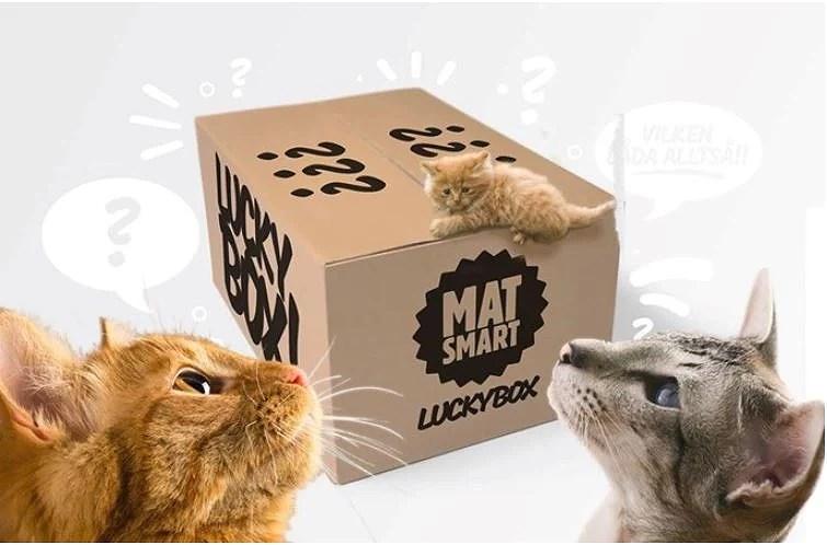 Luckybox för katten