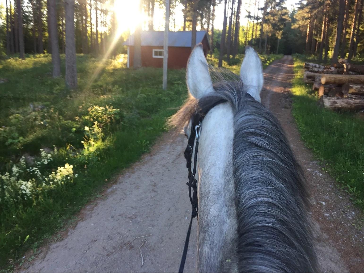 Väderförhållanden/ live från hästryggen