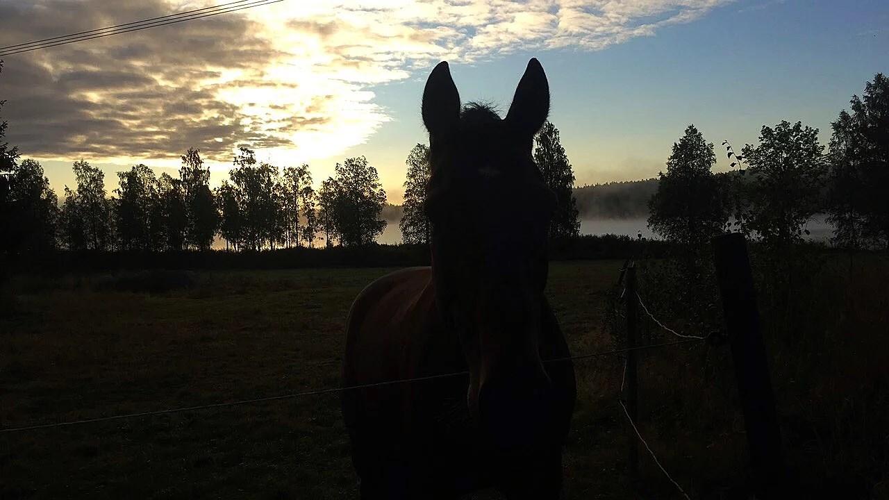 Tre hästar ridna nu tävlingsdags
