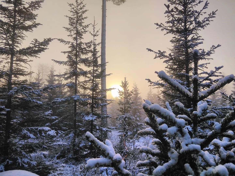 I älgskogen