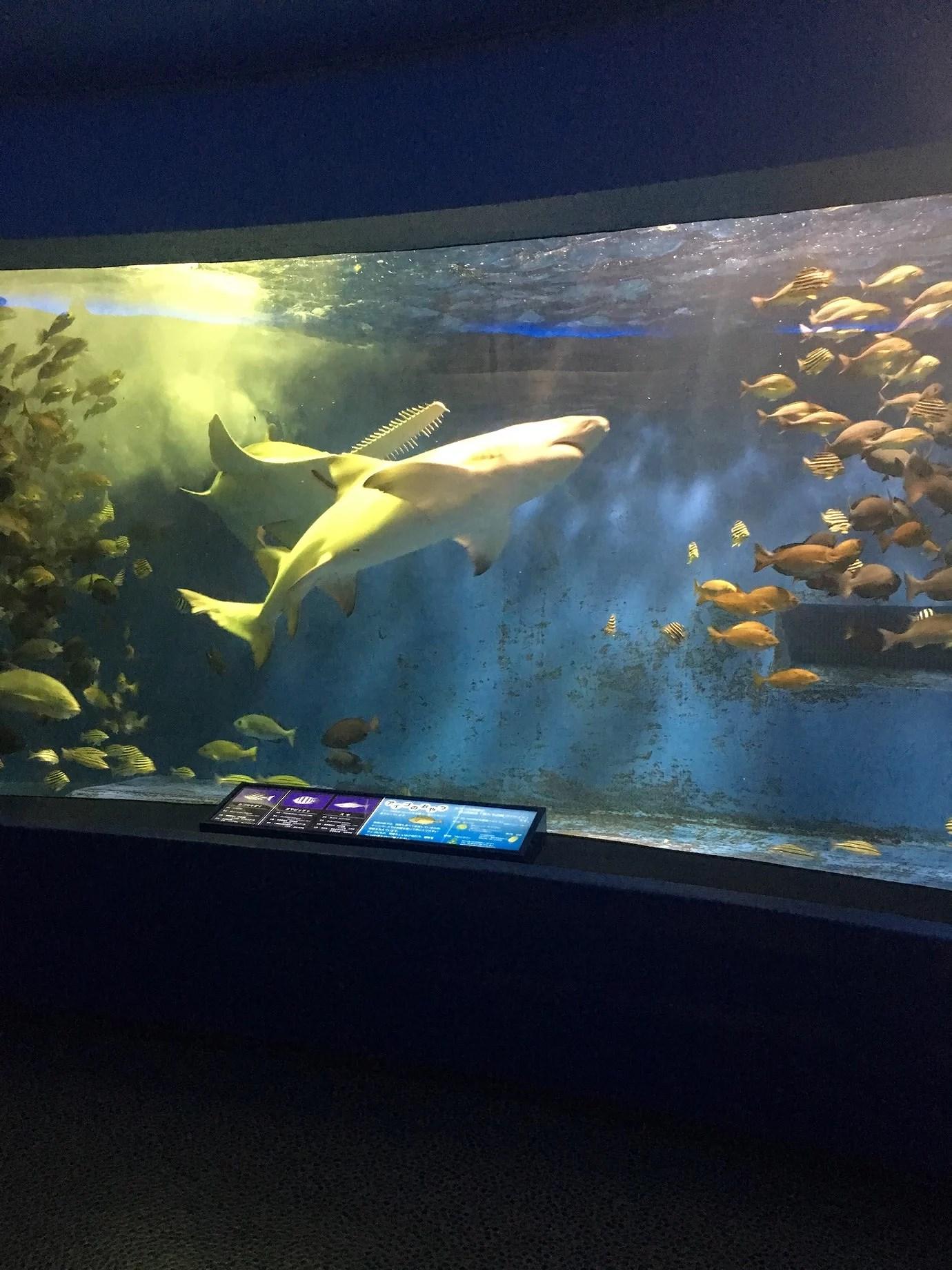 Pretty cool Aquarium