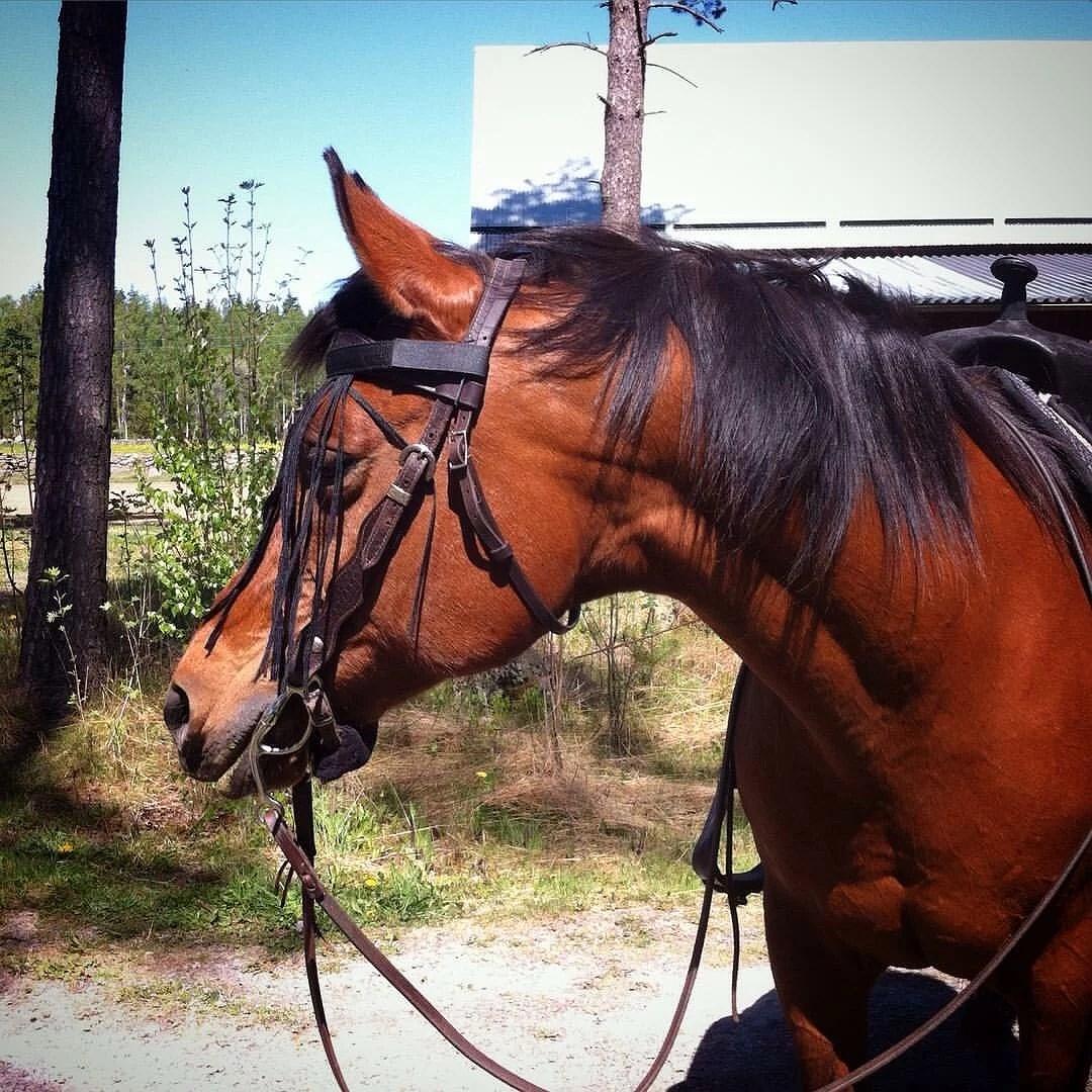 Hästarnas schema v24