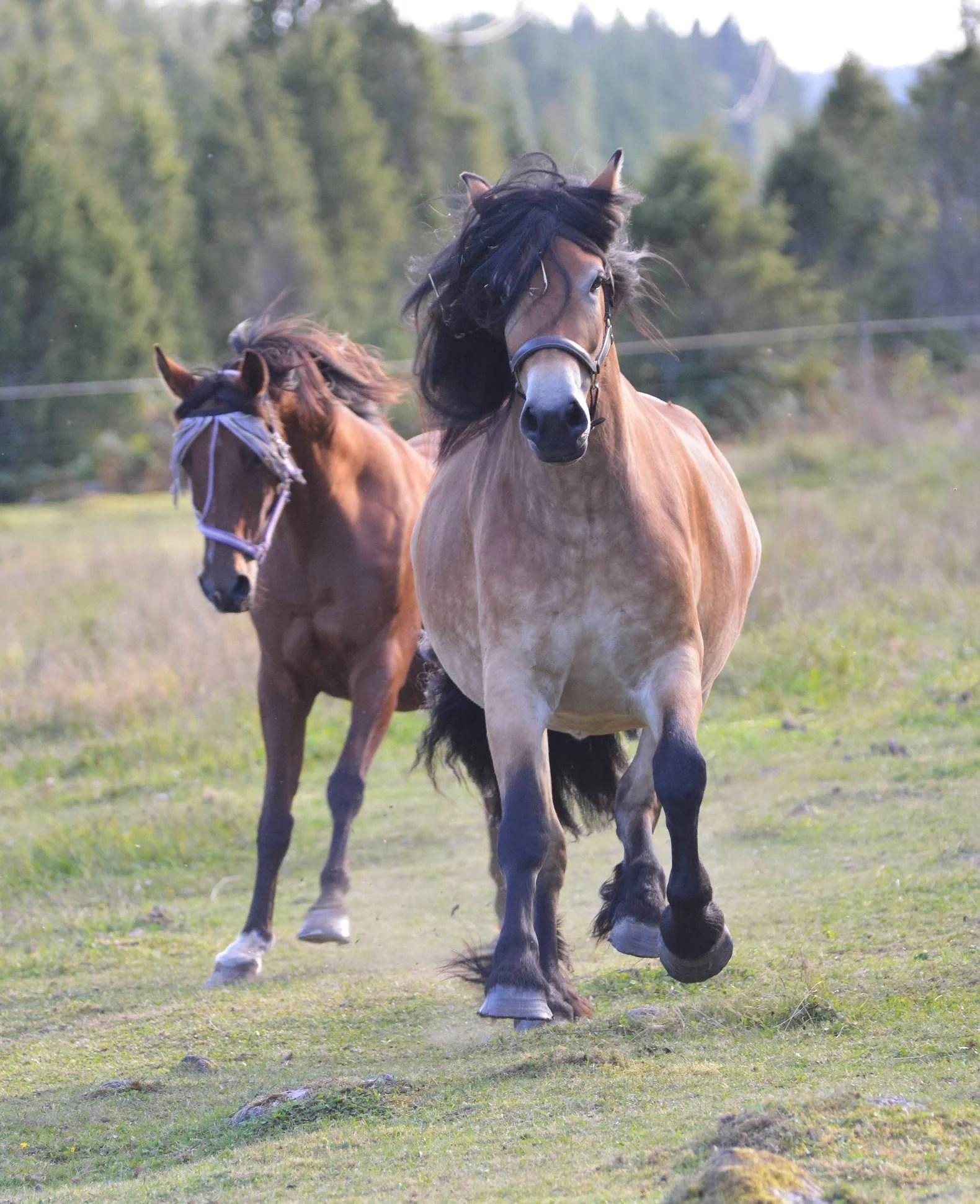 Hästarnas schema v36