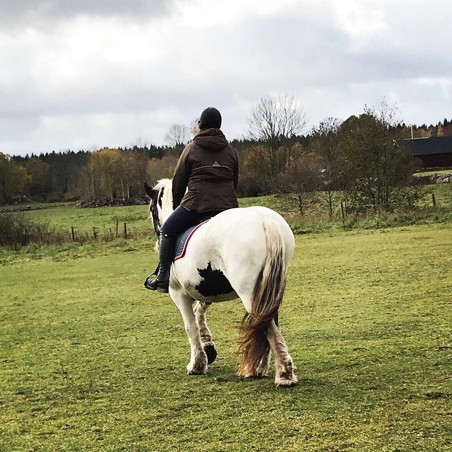 Tittat på häst