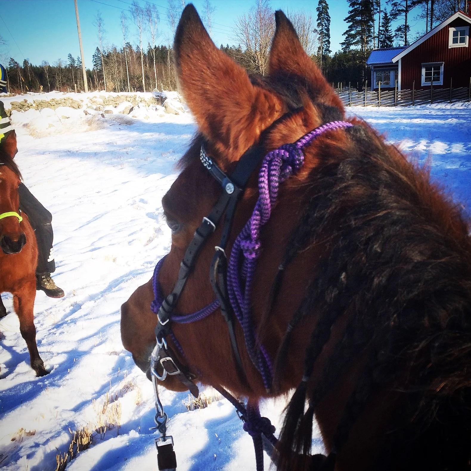 Hästarnas schema v3