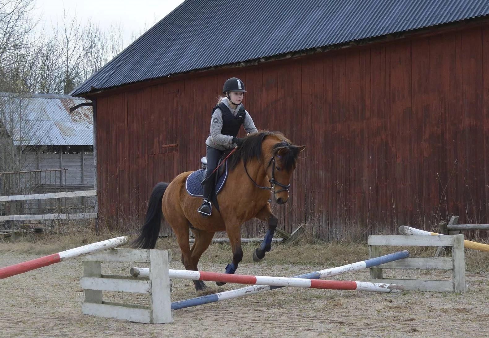Hästarnas schema v15