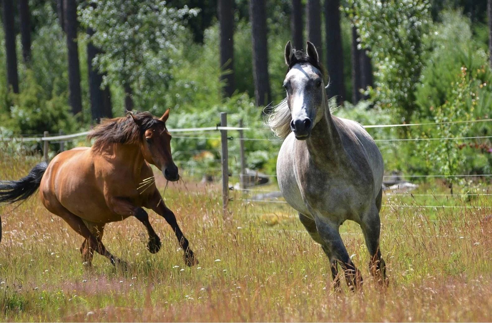 Hästarnas schema v28