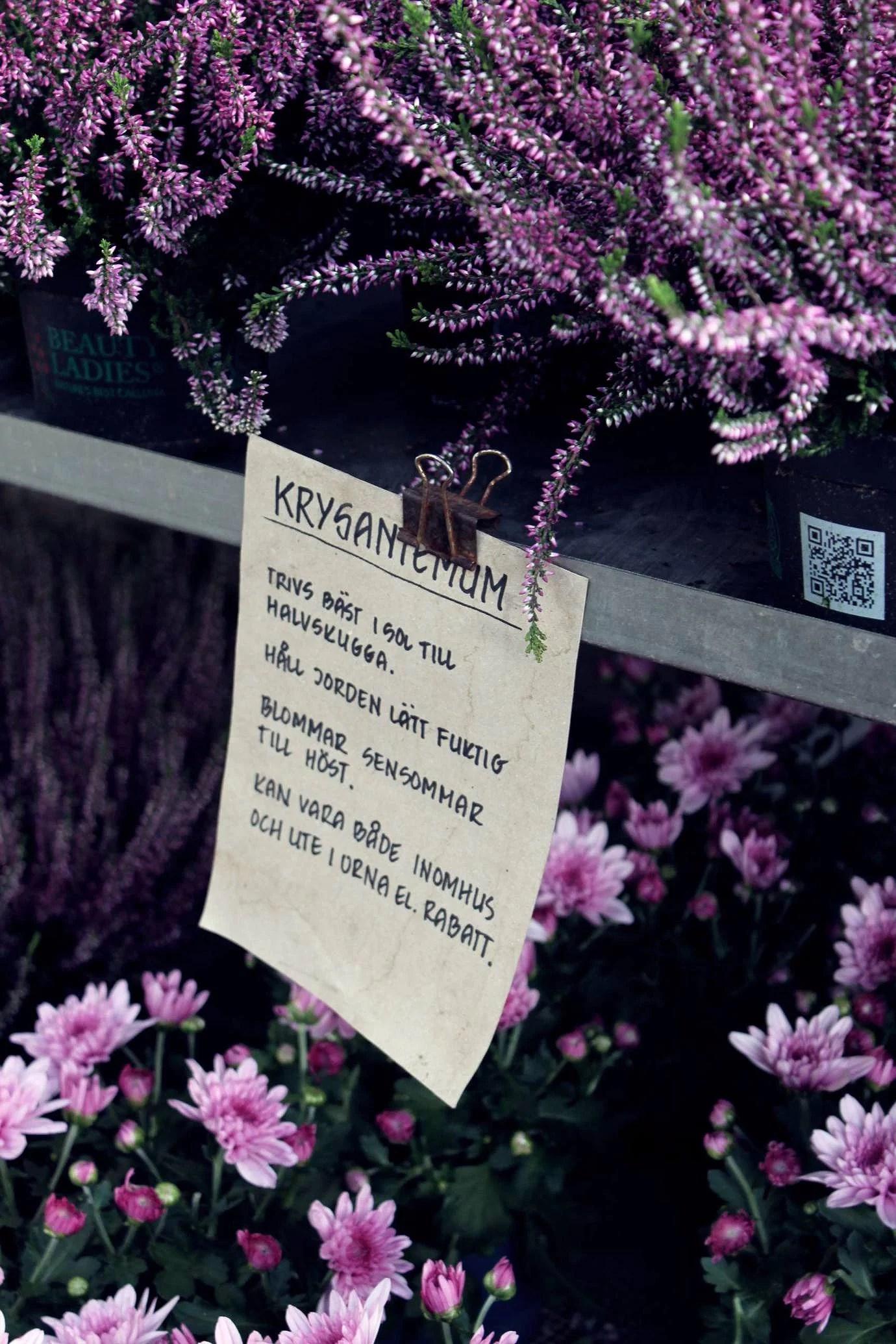 ZETAS TRÄDGÅRD - EN DRÖM FÖR VÄXTÄLSKARE