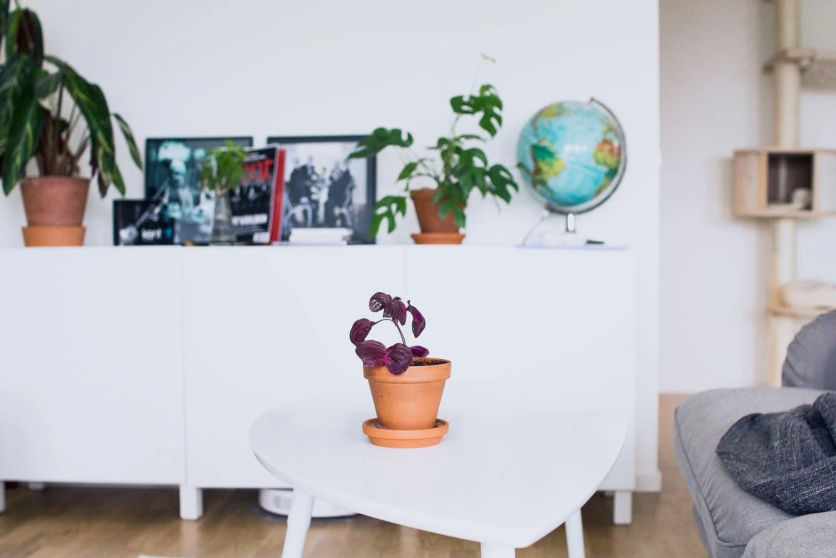 Nya tillskott i växtfamiljen ❥
