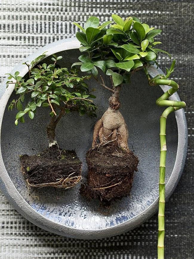 Zenplanten