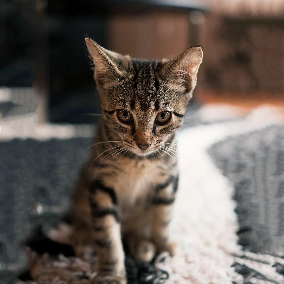 blivit med katt
