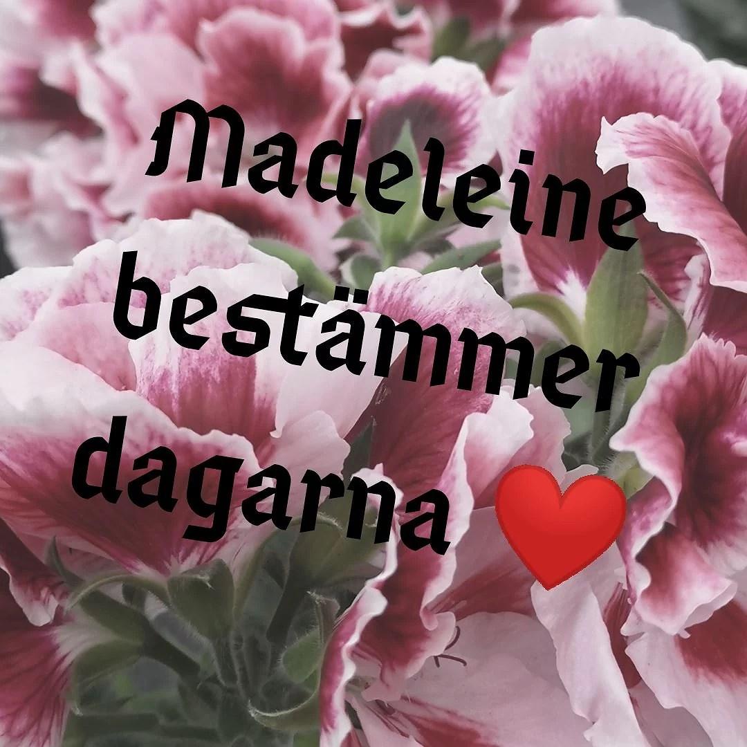 Madeleine bestämmer dagarna, dag 15