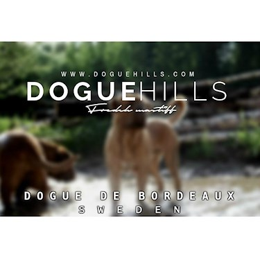 Doguehills