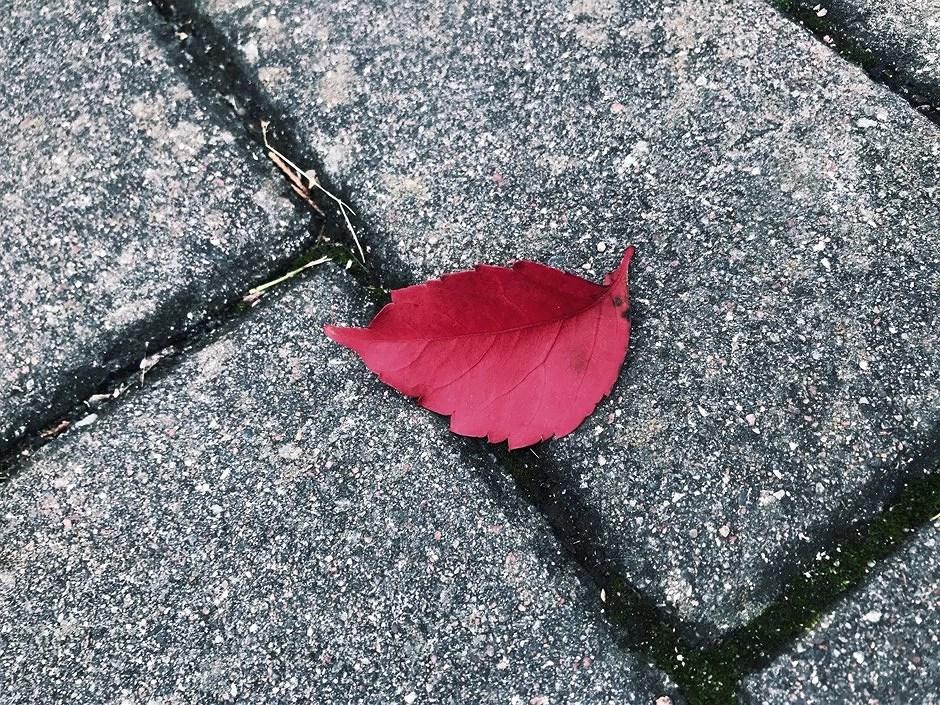 Hösten är fin