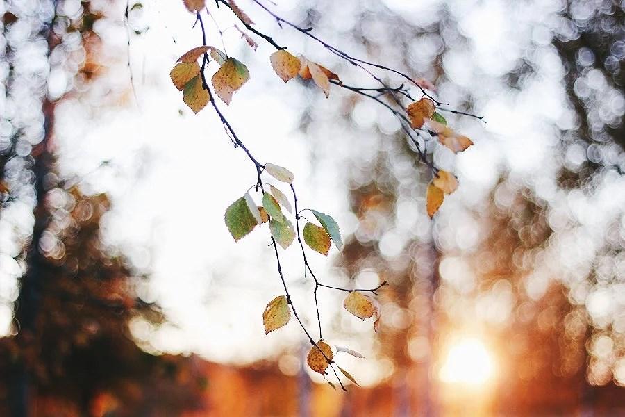 Höst på träden