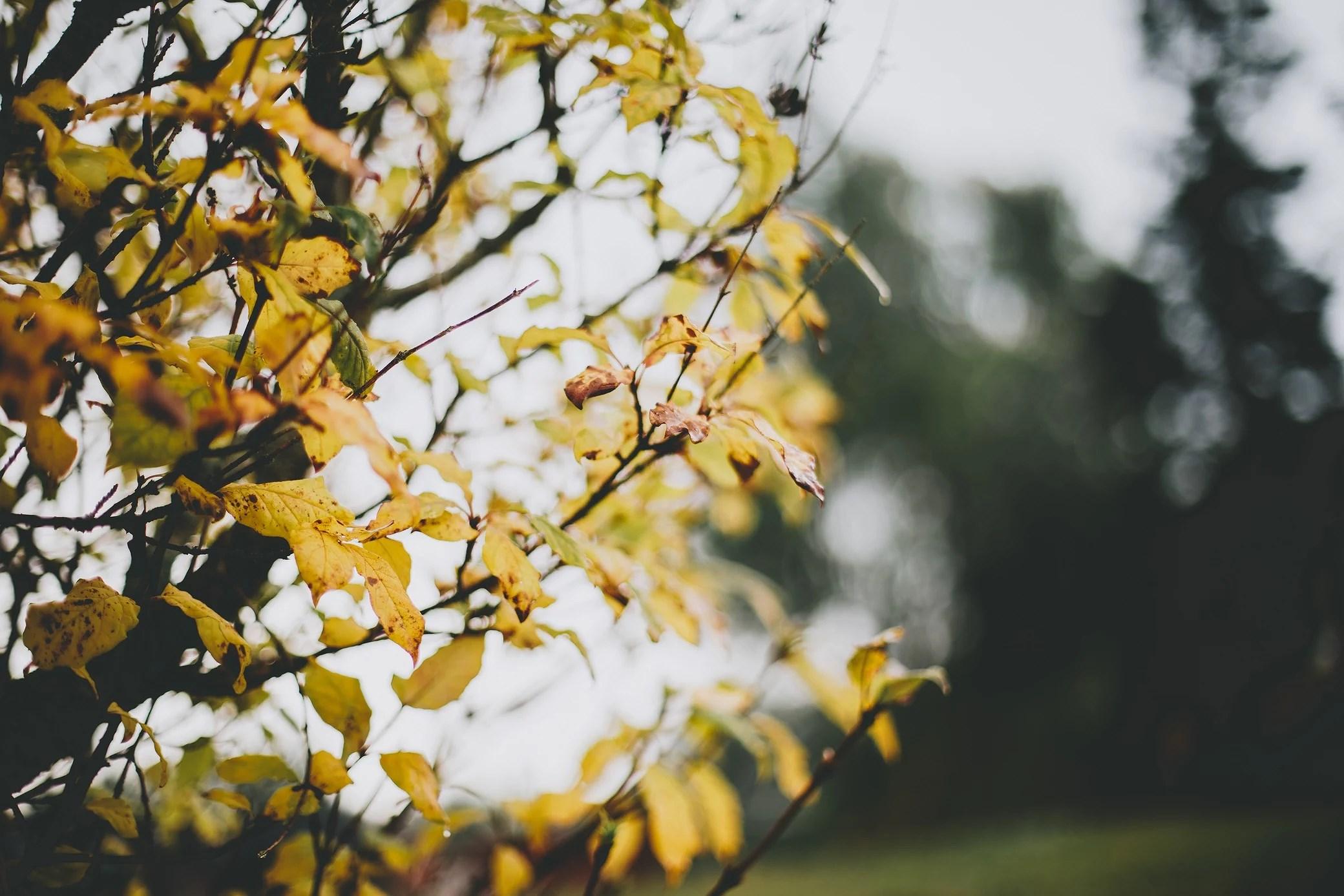 En grå måndag med doft av regn