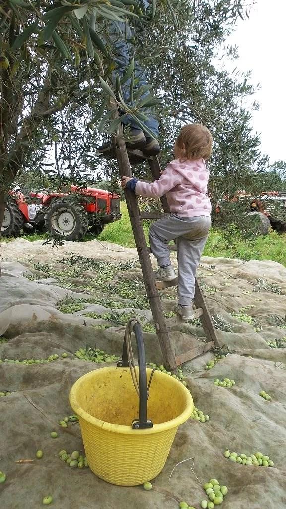 Vi plockar oliver