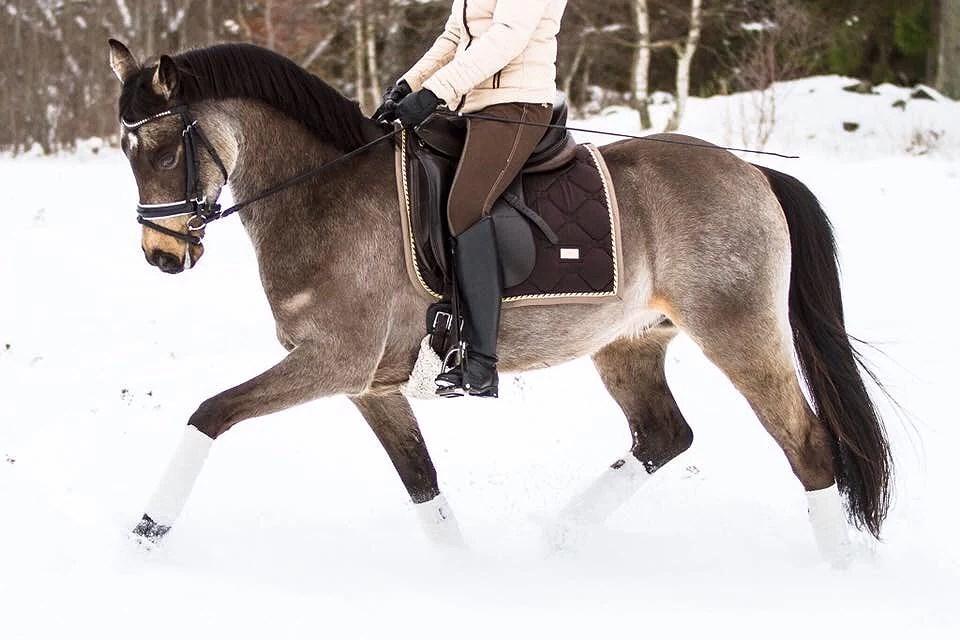 Fina ponnyer och hästar till salu