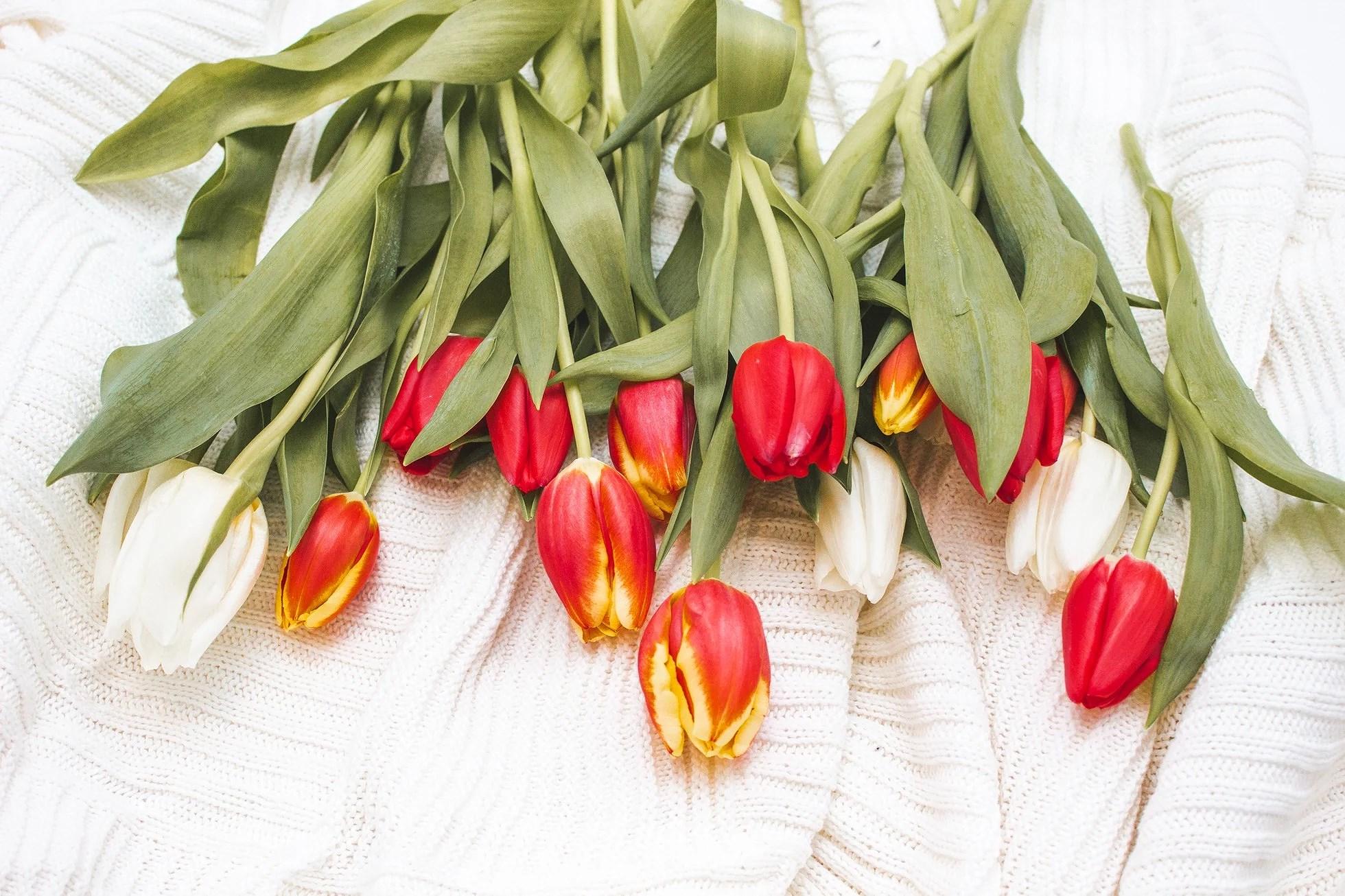 Kuinka saada tulppaanit säilymään kauniina pidempään