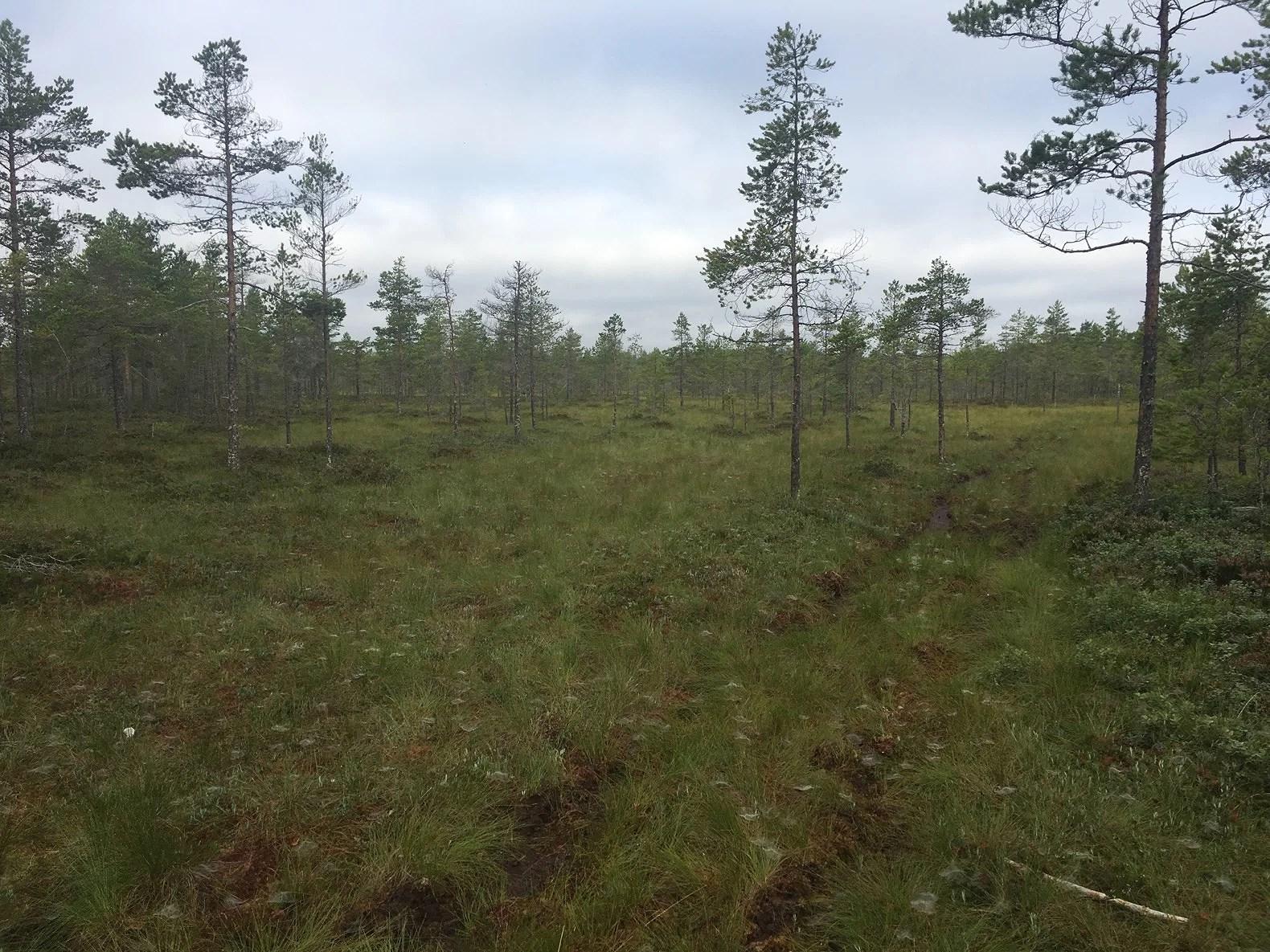 En morgon på myren