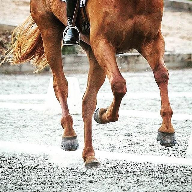 Fulladdad med horsepower.