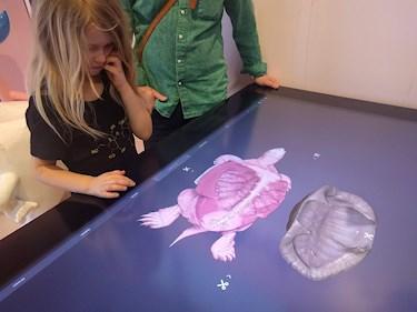 Universeum Göteborg hållbar intressant och rolig semester hemester för barn och vuxna se hur sköldpadda och andra djur ser ut inuti.