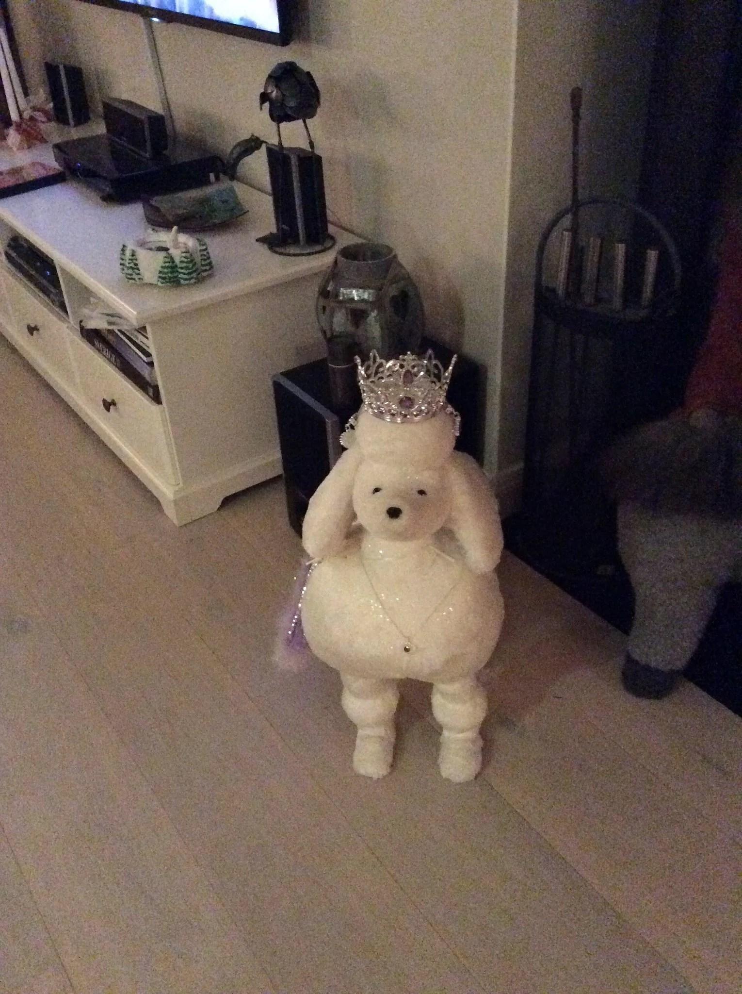 Rumsren hundvalp
