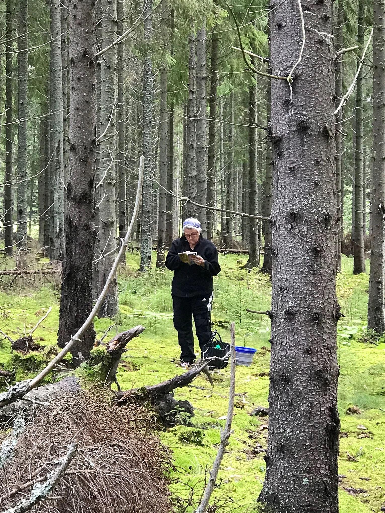isikost.se/bloggar/juliefitness/skogsmulleslårtilligen