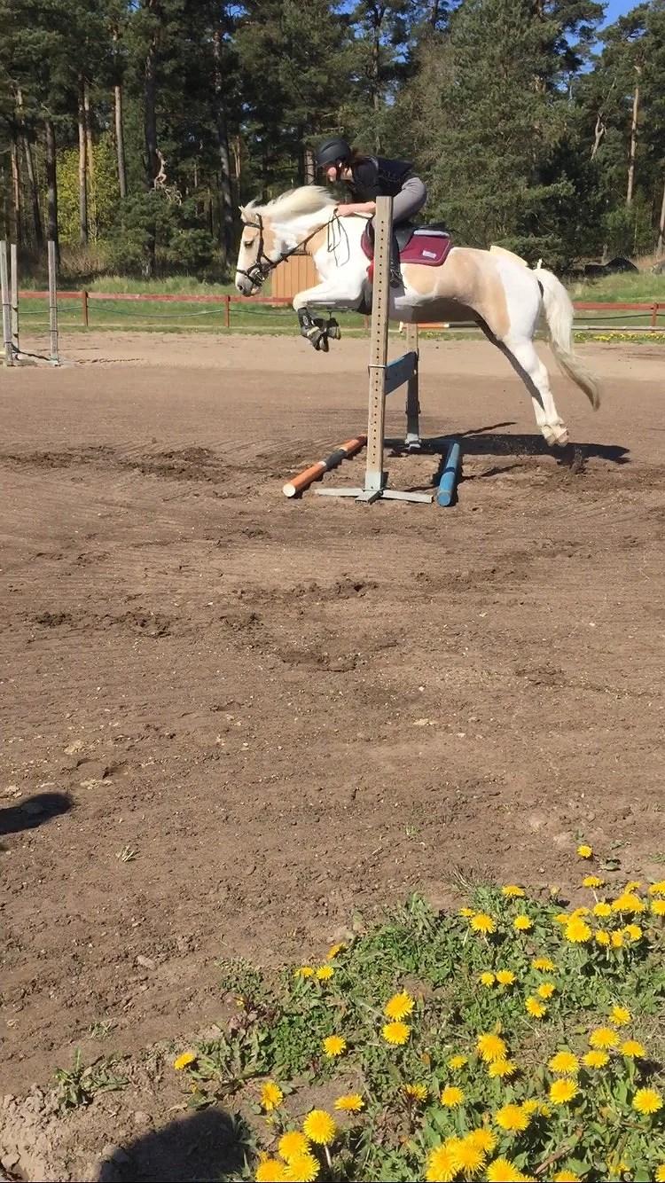 Hästarna V.19